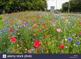 Image of wild flowers growing on a road side verge