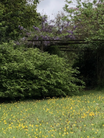 Picture of Buttercup Garden Meadow at Bank Cottage 3.5.2020