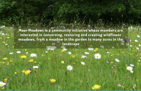 Picture of Moor Meadows wild flower meadow